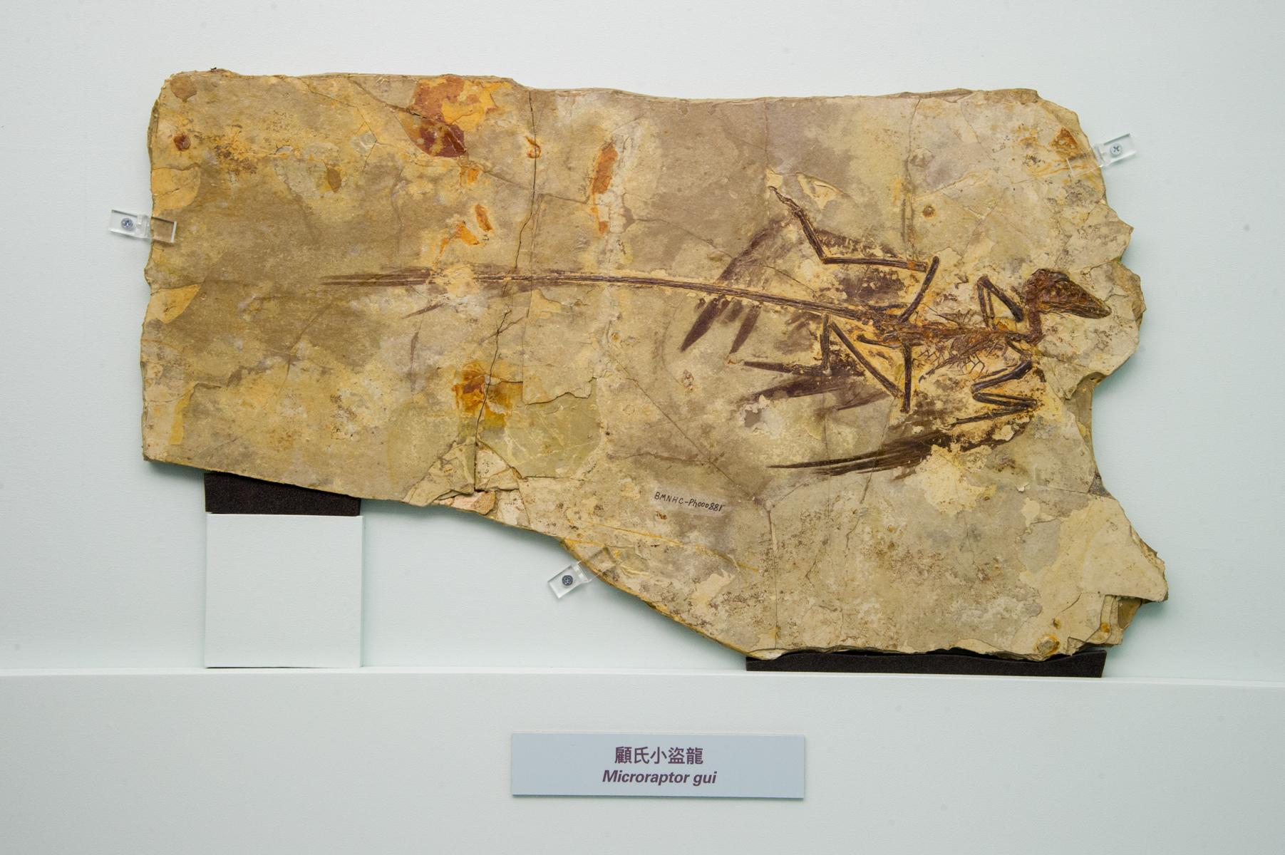 paleophilatelieeu chinese dinosaurs on stamps hong kong
