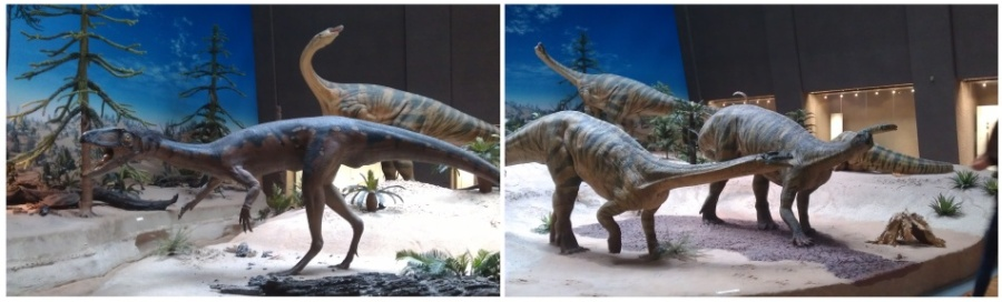 reconstruction of Lilienternus and Plateosaurus dinosaurs from exhibit of Natiral History Museum in Stuttgart