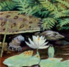 Turtle on stamp of USA 1997