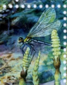 Dragonfly on stamp of USA 1997