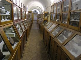 Paleontology museum of Lvov National University