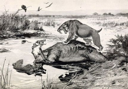 prehistoric animals on  illustration of History of Land Mammals in the Western Hemisphere book of Robert BERRYMAN Scoot