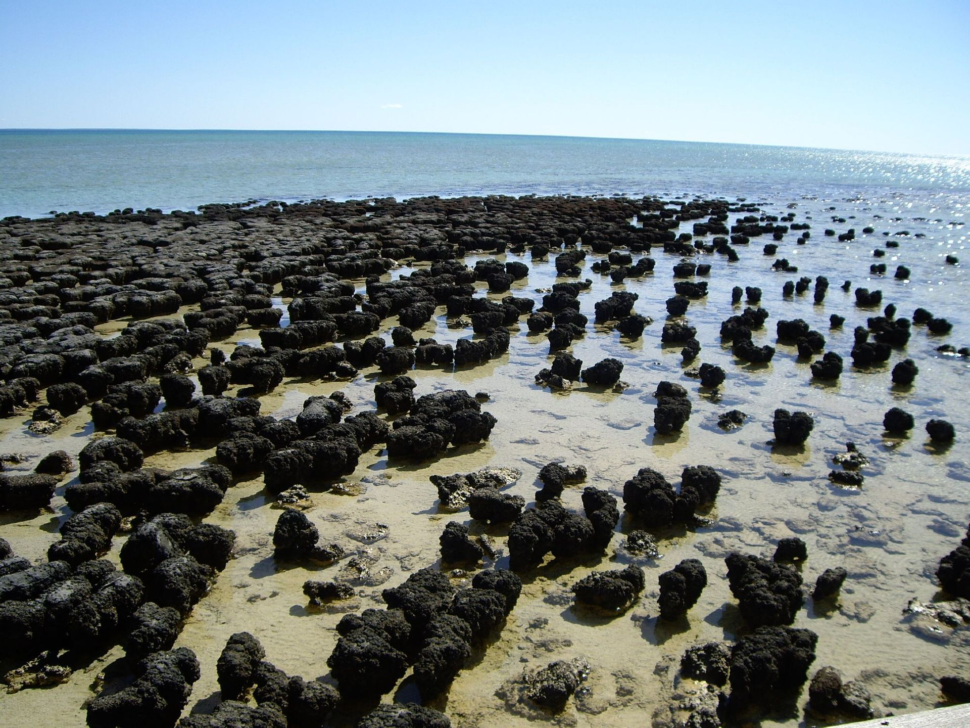 Stromatolite in Shark Bay