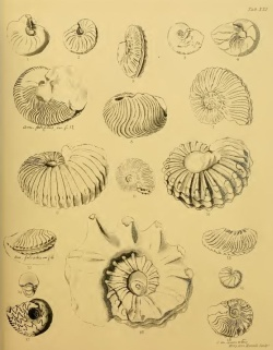 Some fossils from The Fossils of the South Downs book of Gideon Mantel