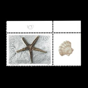 Starfish fossil on stamp of Slovenia 2001