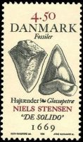 Shark teeth discovered by Neils Stensen